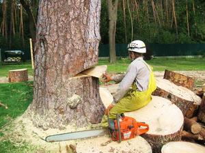 Техника для вывозки леса
